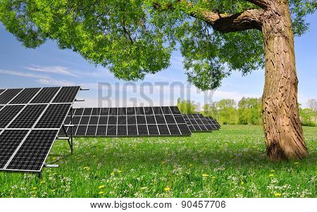 Spring tree with solar energy panels on meadow