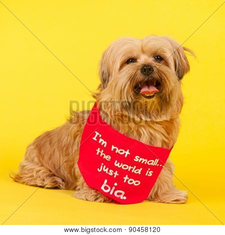 Little mixed breed dog with long hair on yellow background and the text not small but world is too big