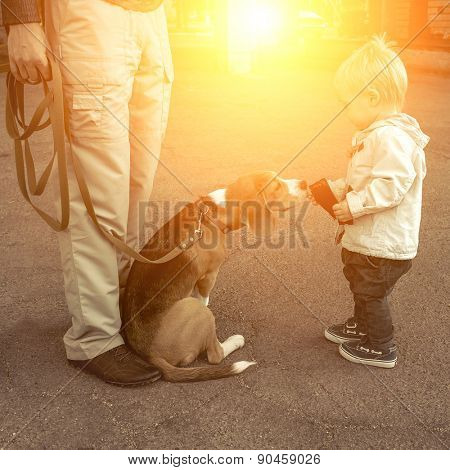 Child fun with beagle dog.