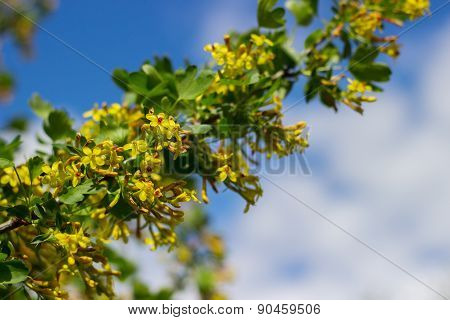 bush with yellow flowers background