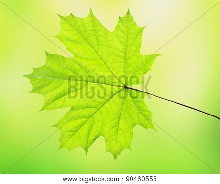 Leaves of tree on blured green background