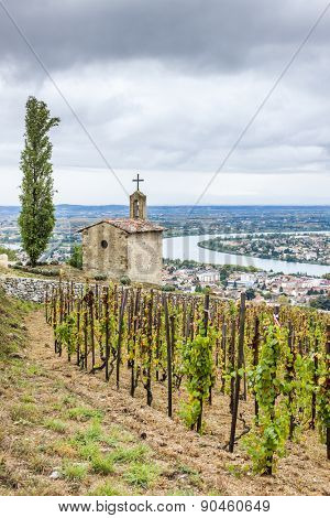grand cru vineyard and Chapel of St. Christopher, L´Hermitage, Rhone-Alpes, France