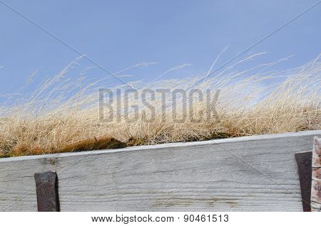 Roof covered with grass