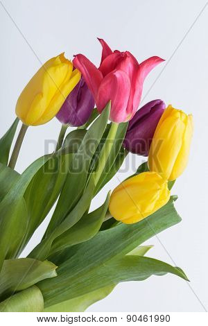 Close up of Flower bouquet from colorful tulips