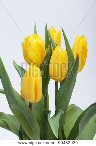 Close up of Flower bouquet from yellow tulips