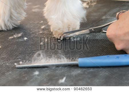 Closeup Of Trimming A Dog's Paw