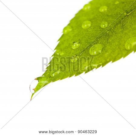 Detail of small water drops on green leaf Nature close up shot