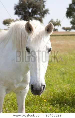 White horse in the meadow with a beautiful blue sky