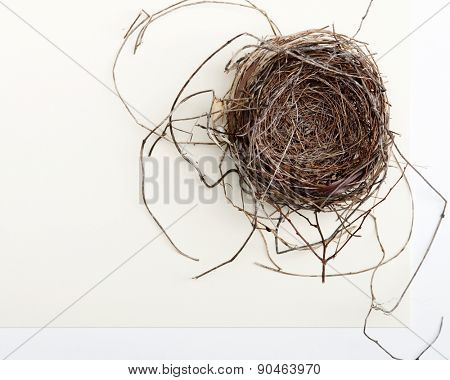 Bird Nest on Two-toned Background