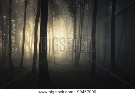 Sunrise in a dark haunted forest with fog