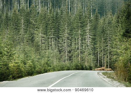 Coniferous Forest With Timber Logs Beside Desolate Road