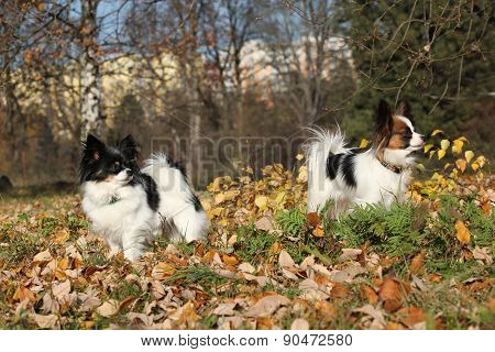 Gorgeous Papillons In Autumn
