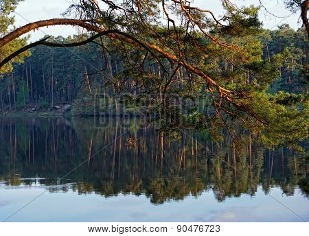 Pine branch over the lake at sunset