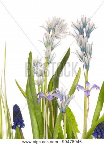 Delicate Flowers Spring Field