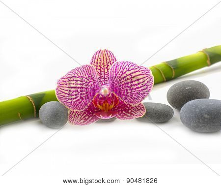 Spa stones and orchid with bamboo grove isolated on the white background