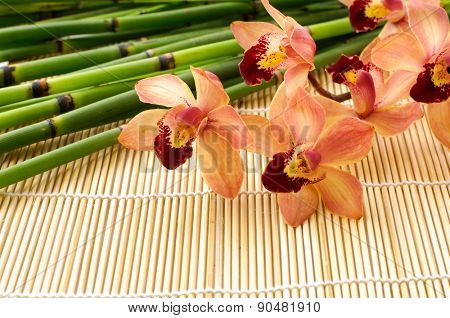 Branch orchid with thin bamboo grove on mat