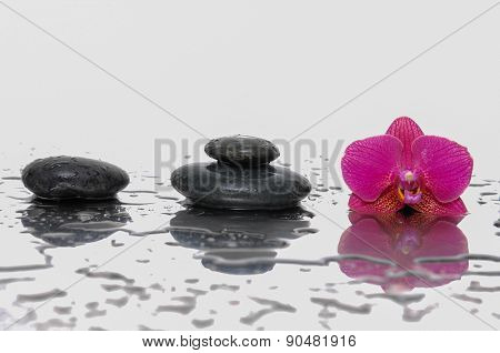 Still life with wet stones with pink orchid