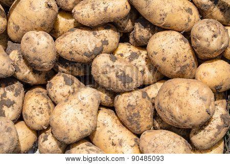 The Potatoes