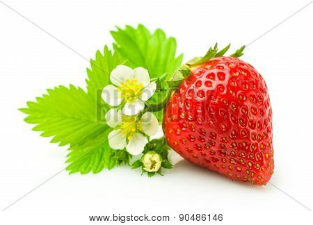 Fresh Ripe Strawberry With Leaf And Flowers