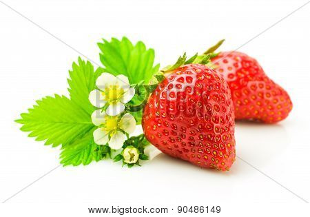 Fresh Ripe Strawberries With Leaf And Flowers