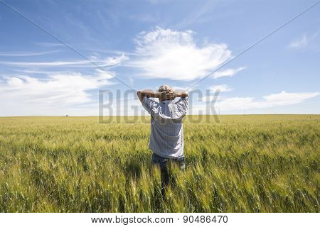 Farmer  Is Watching  The Harvest Wheat Quality