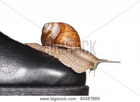 Snail On Boot Toe