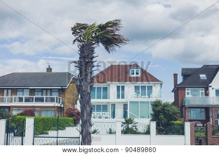 Palm Tree By The Seaside With Terraced Houses