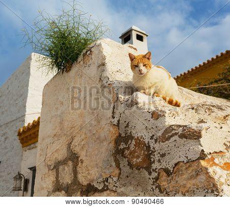Greece cat