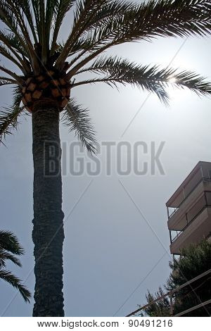 Palm tree silhouette with sun flare