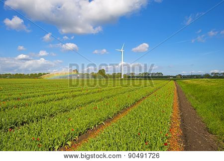 Water cannon irrigating a field with tulips in spring