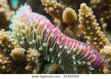 Sea anemone and coral