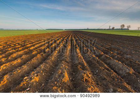 Plowed Field Landscape