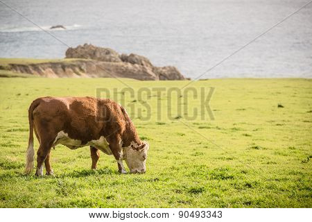 Cow And The Farmland