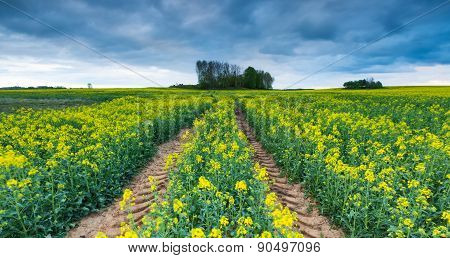 Blooming Rapeseed Field Under Cloudy Sky