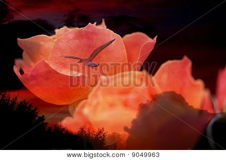 Rose With Bird Flying Into Shining Sunset