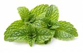 image of mint-green  - Green mint leaves isolated on a white background - JPG