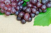 stock photo of sackcloth  - bunch of ripe grapes on sackcloth background - JPG