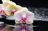 foto of stone-therapy  - Beautiful white orchid and therapy stones  - JPG