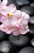 stock photo of stone-therapy  - Beautiful orchid with and therapy stones  - JPG