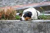 picture of sad dog  - Lonely and sad homeless dog lying on the street - JPG