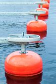 picture of fragmentation  - Red mooring buoys in a row floating on blue water small European yacht club marina port fragment vertical photo - JPG