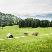 picture of ecosystem  - Idyllic dairy farms on alpine meadow with coniferous and deciduous forest in desolate area of national park - JPG