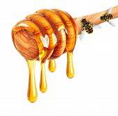 stock photo of dripping  - dripping honey and bee isolated on white background - JPG