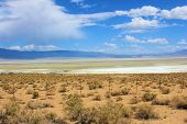 image of sagebrush  - Owens dry lake with abundant salt which is dry because the water source is diverted to the Los Angeles aqueduct - JPG