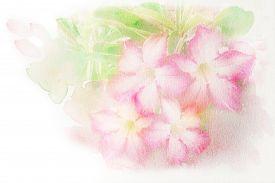 foto of azalea  - Abstract watercolor illustration of blossom pink flower  - JPG
