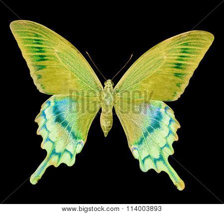macro photo of yellow butterfly isolated on black background