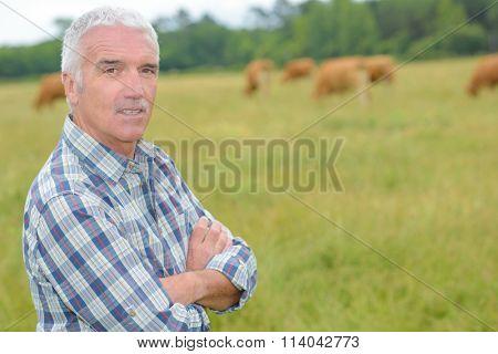 cattle farming