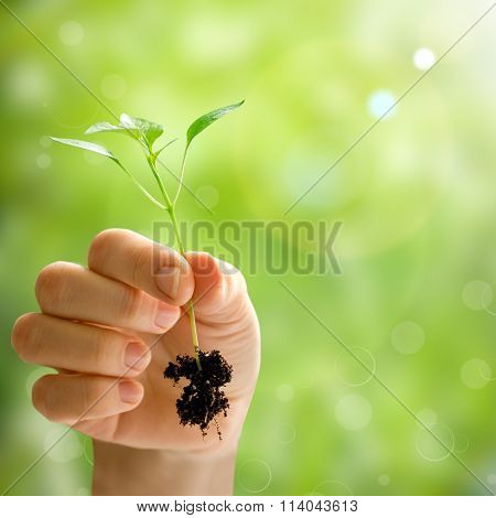 wooman holding a plant between hands on a spring backgrounds