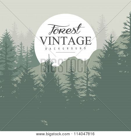 Vintage Pine Forest. Vector Illustration