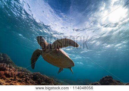 Underwater shot of the turtle in the clear sea